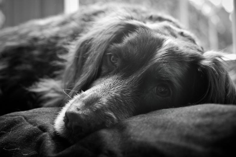 honden-2.jpg