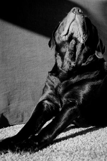 honden13.jpg