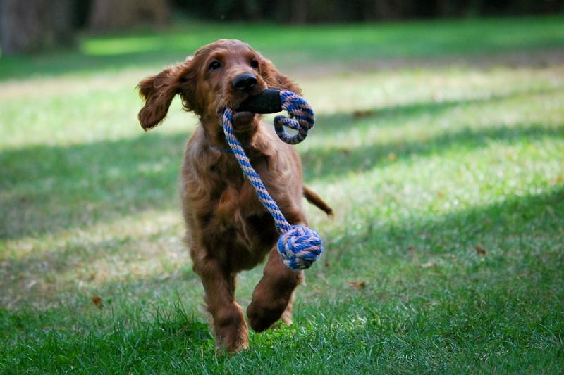 honden18.jpg
