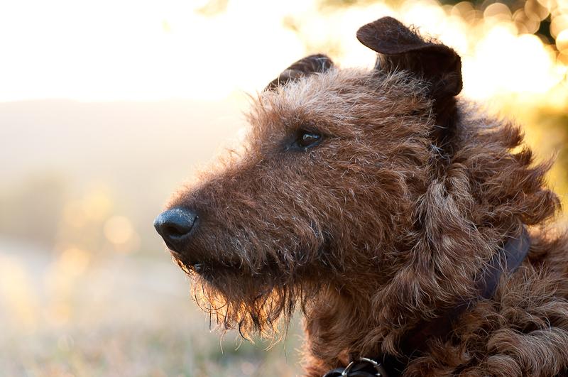 honden21.jpg