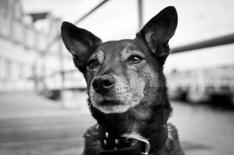 Honden23.jpg