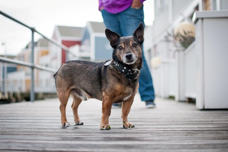 honden24_1.jpg