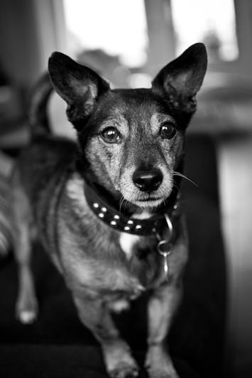 Honden25.jpg