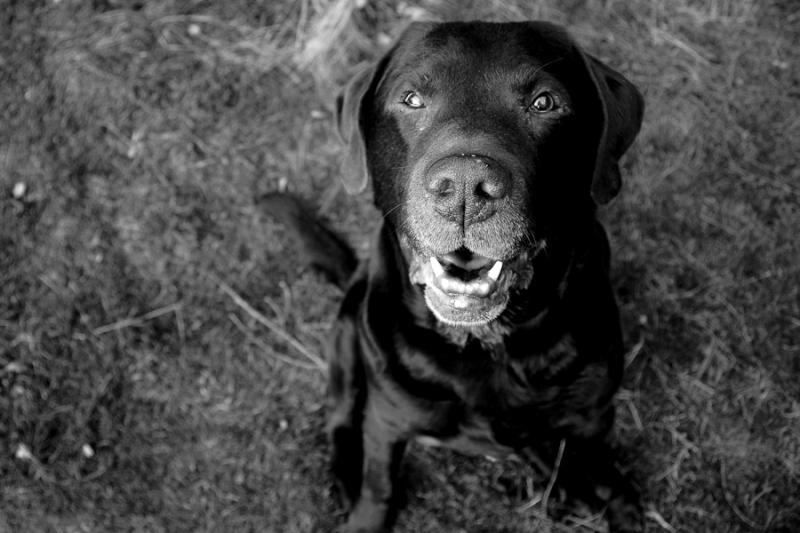 honden9.jpg