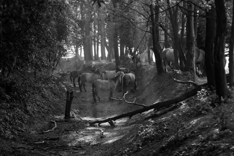 paarden (1 van 1)-3.jpg