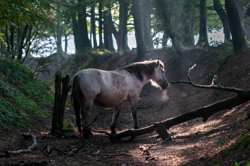 paarden (1 van 1)-4.jpg
