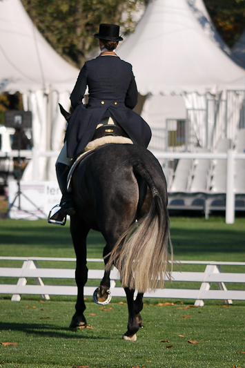 paarden11.jpg