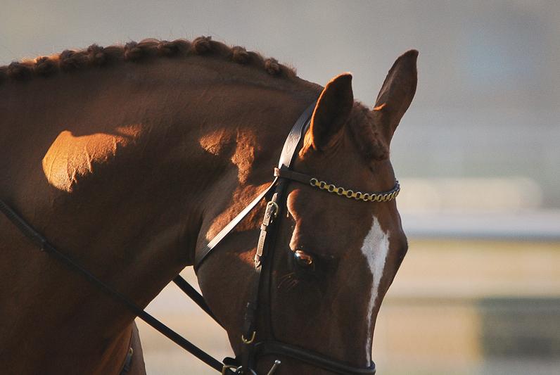 paarden15.jpg