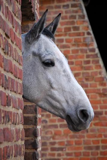 paarden18.jpg