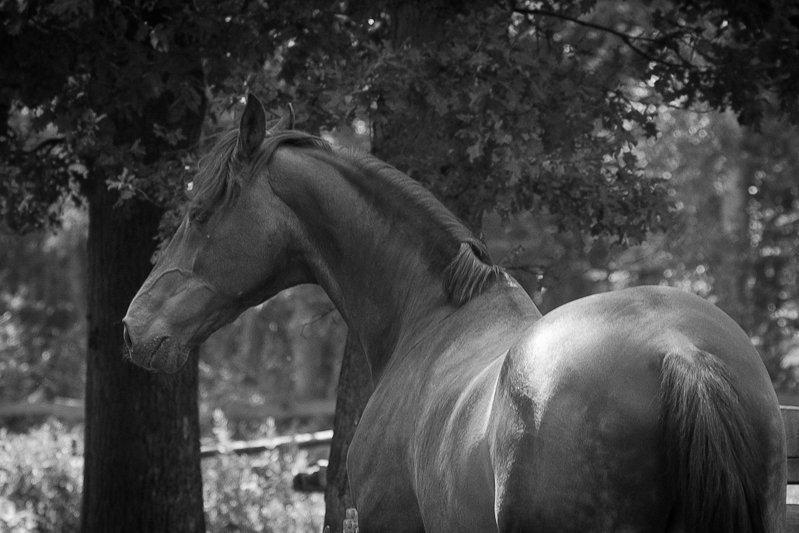 paarden19.jpg