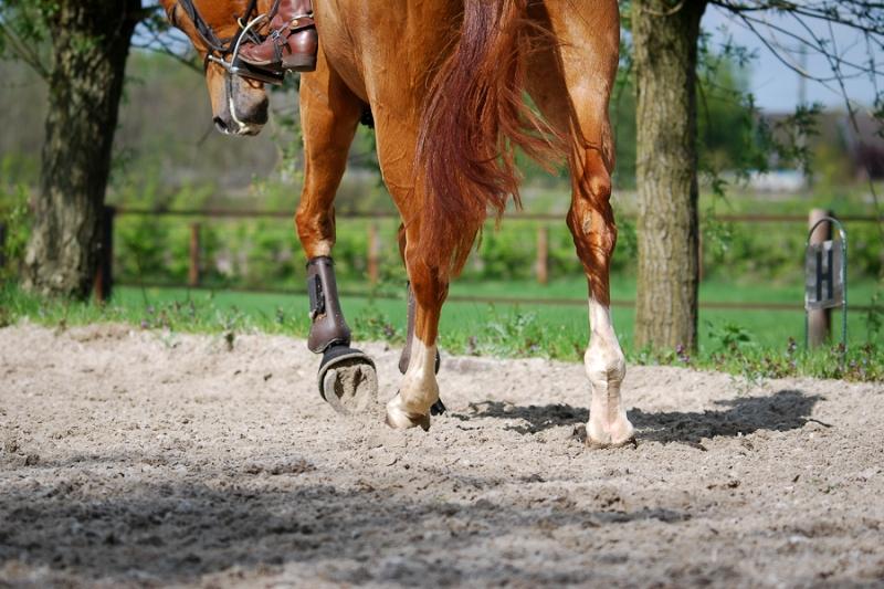 paarden2.jpg