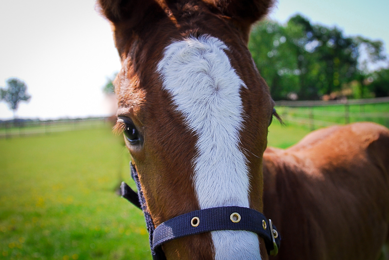 paarden20.jpg