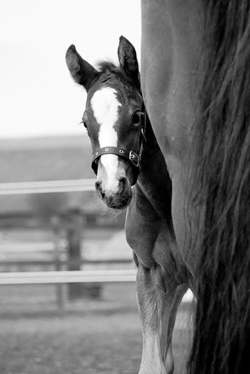 paarden4.jpg
