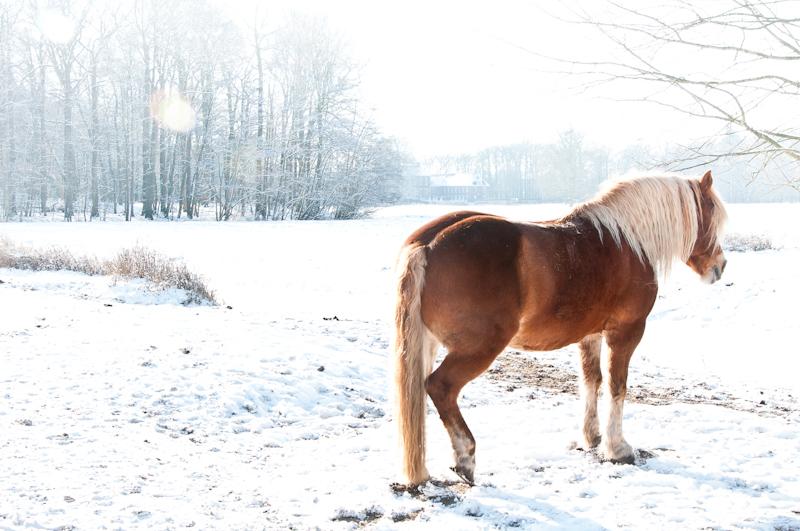 Paardenfotografie_sneeuw4.jpg