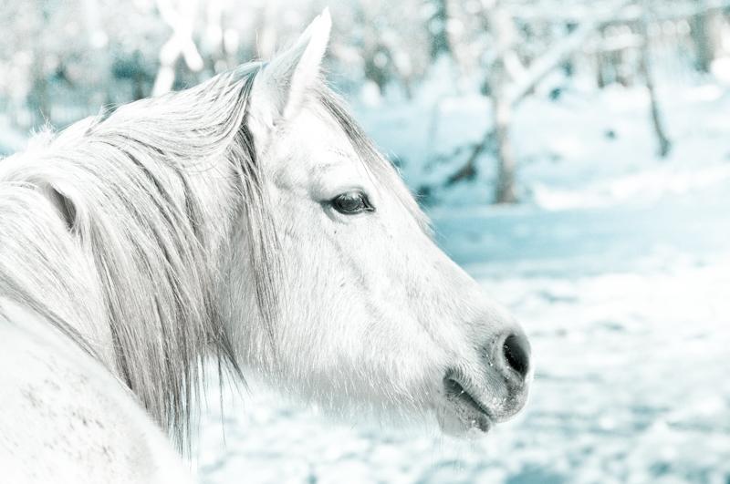 Paardenfotografie_sneeuw5.jpg