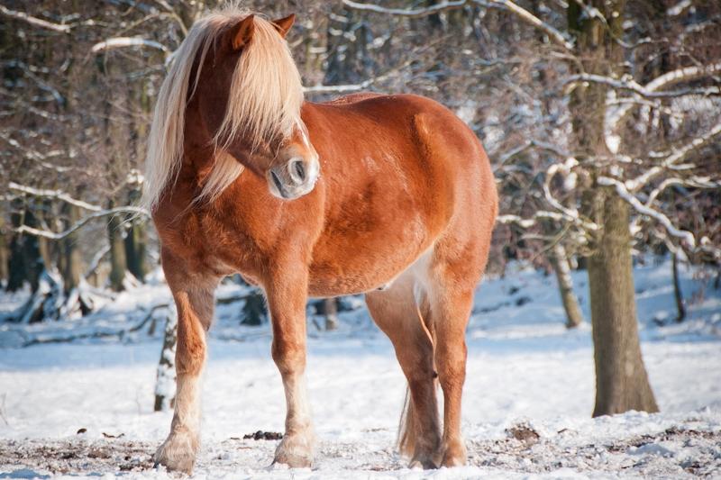 Paardenfotografie_sneeuw6.jpg