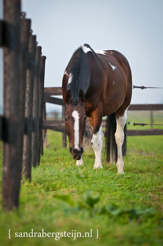 Paardenfotografie Picasso